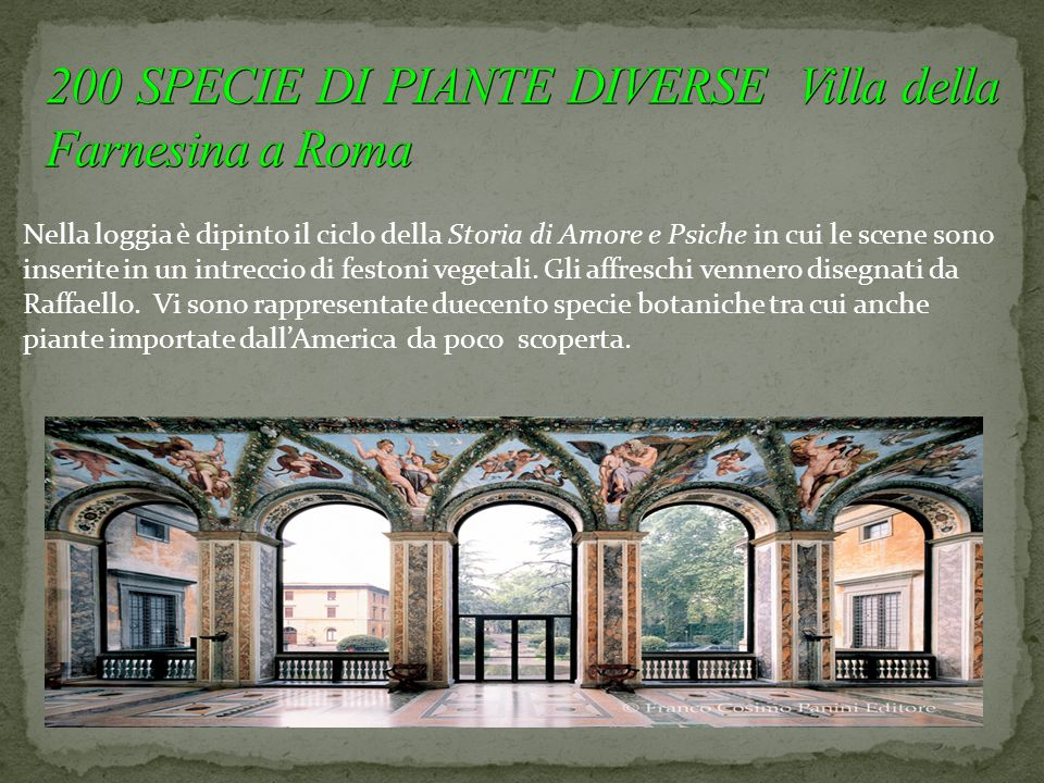 200 SPECIE DI PIANTE DIVERSE Villa della Farnesina a Roma