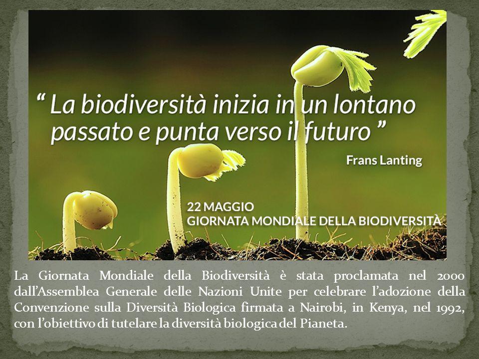 La Giornata Mondiale della Biodiversità è stata proclamata nel 2000 dall'Assemblea Generale delle Nazioni Unite per celebrare l'adozione della Convenzione sulla Diversità Biologica firmata a Nairobi, in Kenya, nel 1992, con l'obiettivo di tutelare la diversità biologica del Pianeta.