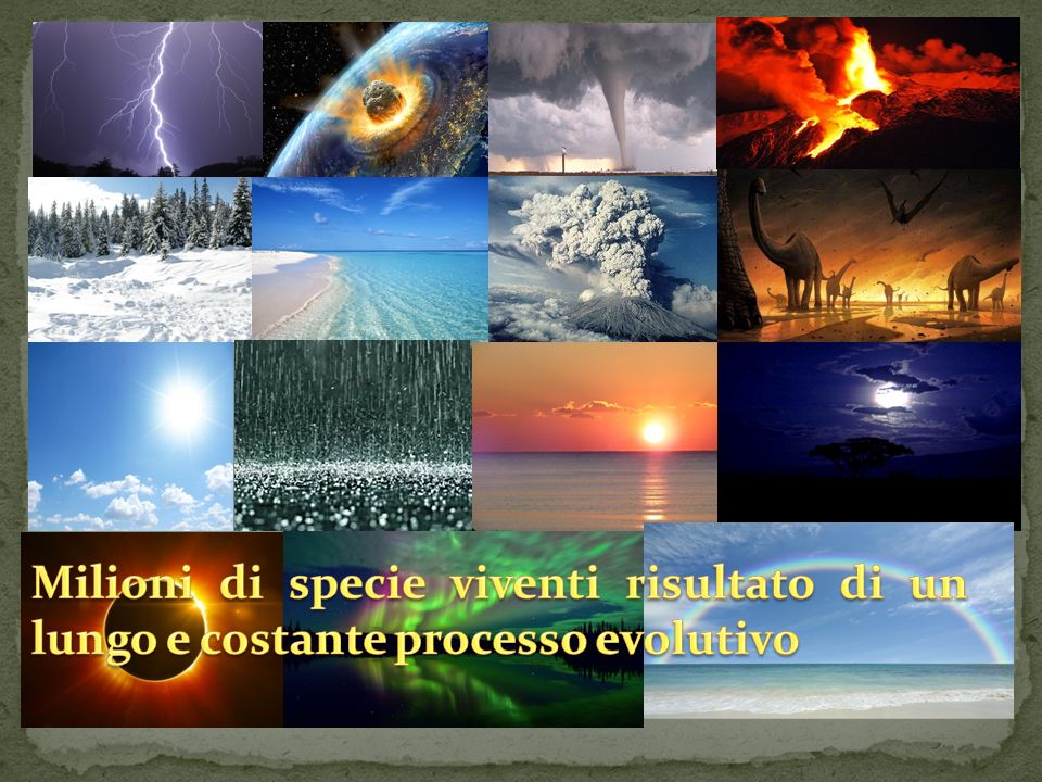 Milioni di specie viventi risultato di un lungo e costante processo evolutivo