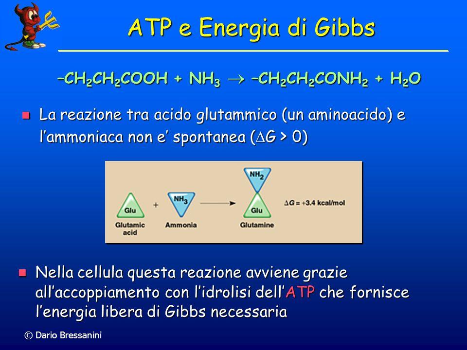 ATP e Energia di Gibbs –CH2CH2COOH + NH3  –CH2CH2CONH2 + H2O