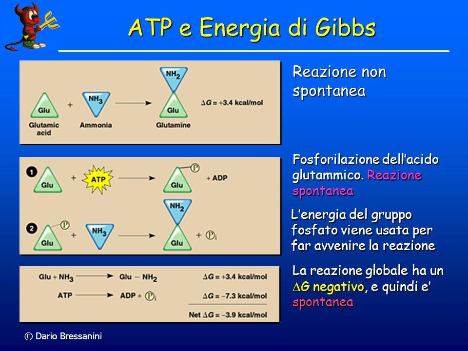 ATP e Energia di Gibbs Reazione non spontanea