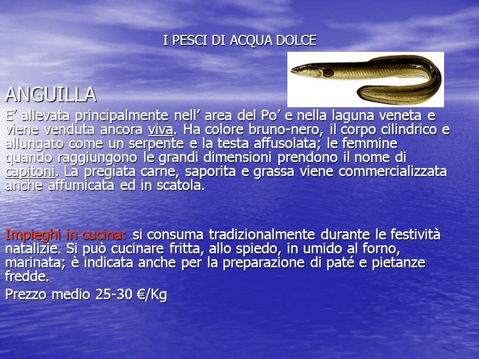 I pesci di acqua dolce anguilla ppt video online scaricare for Pesci acqua dolce