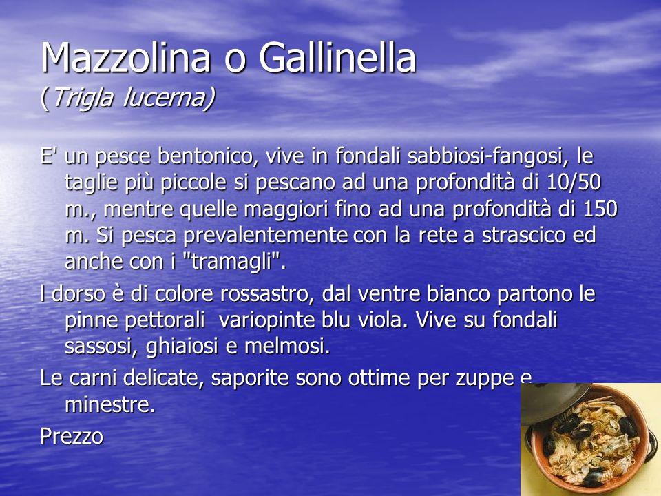 Mazzolina o Gallinella (Trigla lucerna)