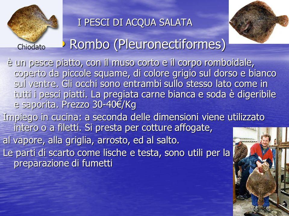 Rombo (Pleuronectiformes)
