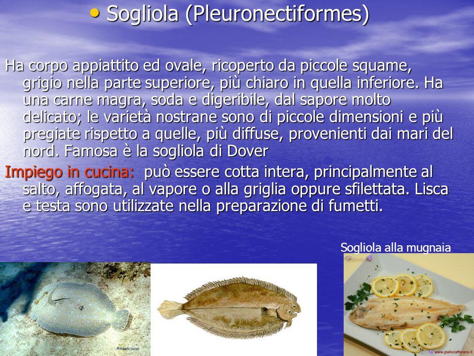 Sogliola (Pleuronectiformes)