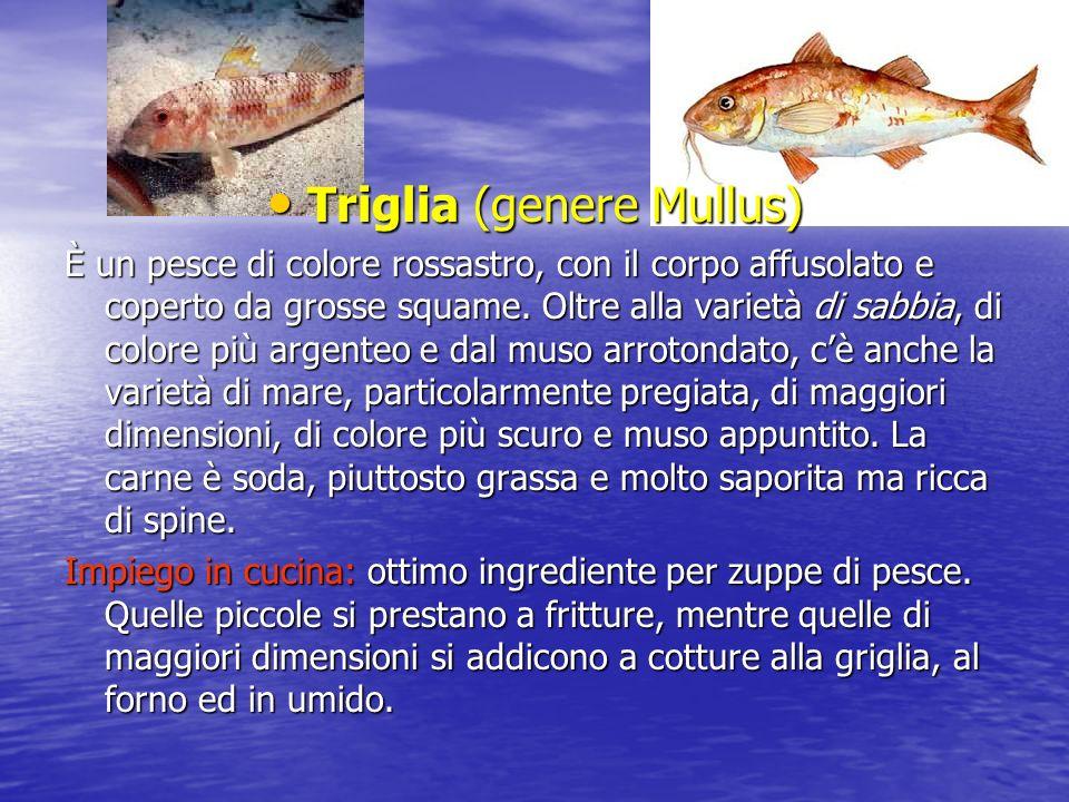 Triglia (genere Mullus)