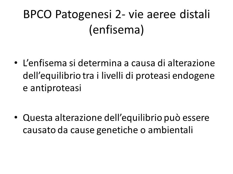 BPCO Patogenesi 2- vie aeree distali (enfisema)