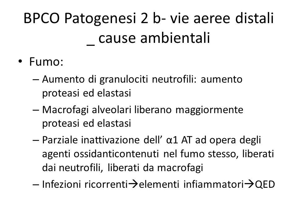 BPCO Patogenesi 2 b- vie aeree distali _ cause ambientali