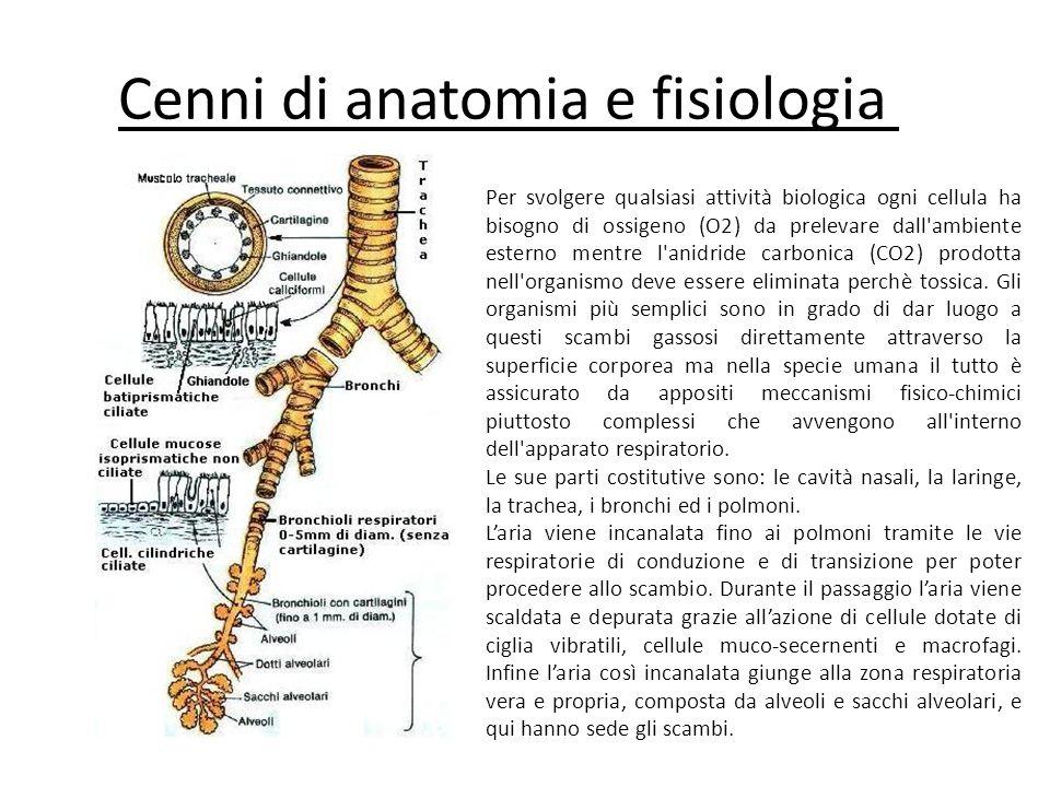 Cenni di anatomia e fisiologia 1