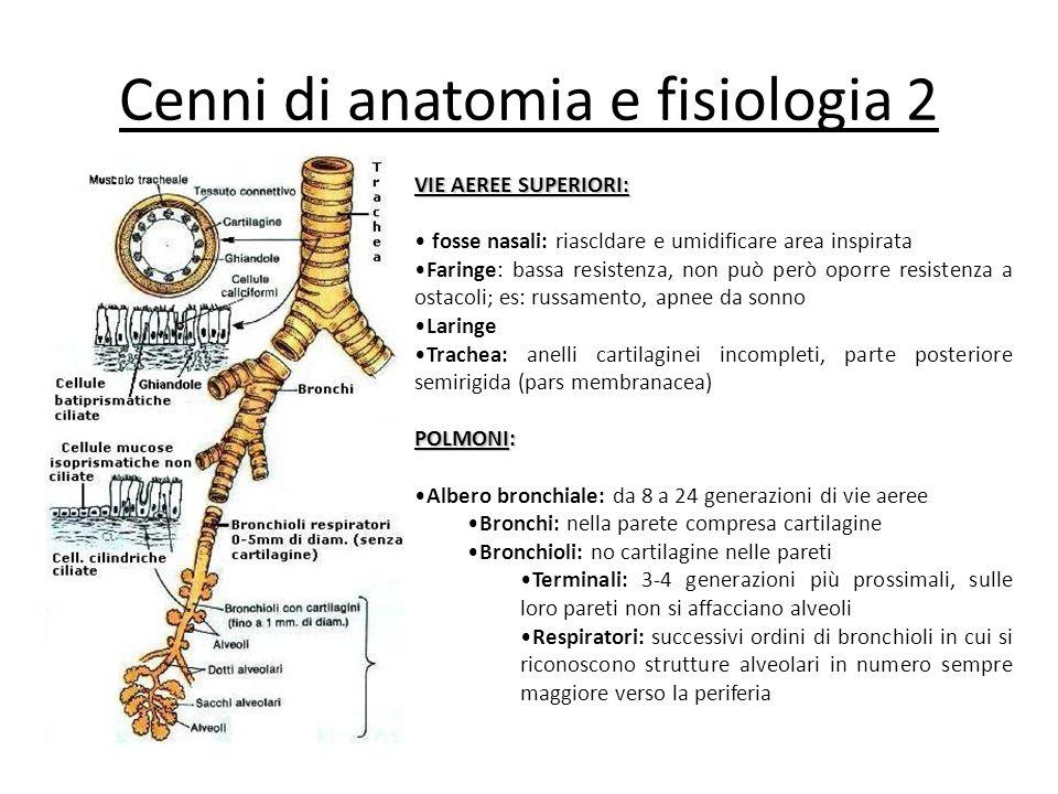 Cenni di anatomia e fisiologia 2