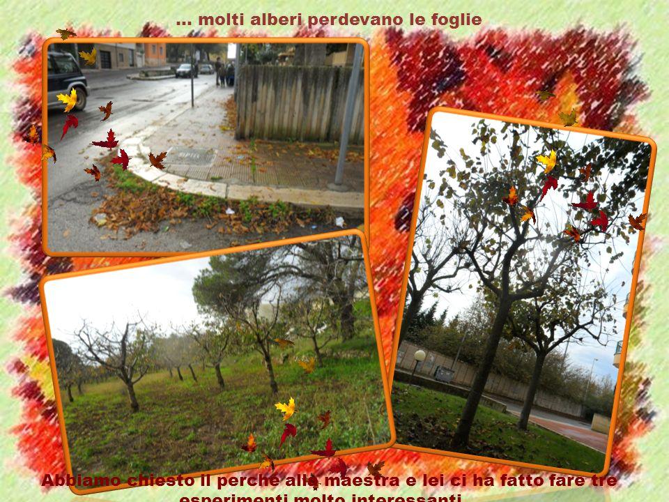 … molti alberi perdevano le foglie