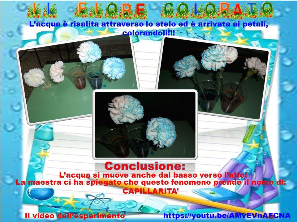 L'acqua è risalita attraverso lo stelo ed è arrivata ai petali, colorandoli!!!