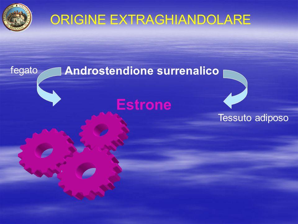 Estrone ORIGINE EXTRAGHIANDOLARE Androstendione surrenalico fegato