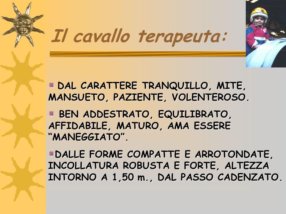 Il cavallo terapeuta:DAL CARATTERE TRANQUILLO, MITE, MANSUETO, PAZIENTE, VOLENTEROSO.