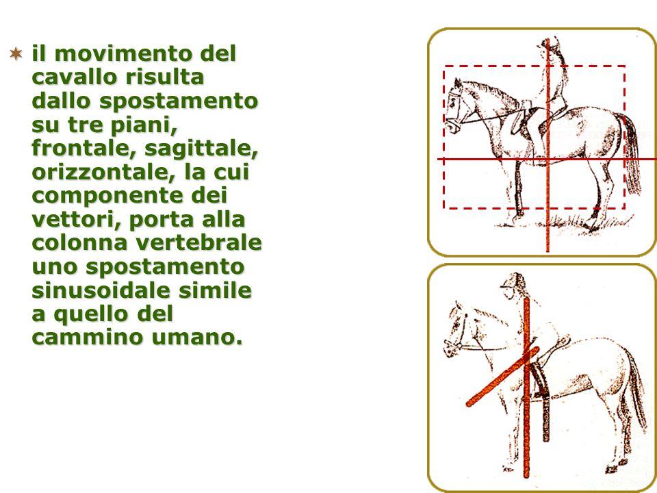 il movimento del cavallo risulta dallo spostamento su tre piani, frontale, sagittale, orizzontale, la cui componente dei vettori, porta alla colonna vertebrale uno spostamento sinusoidale simile a quello del cammino umano.