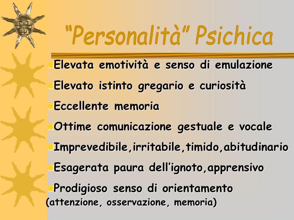 Personalità Psichica