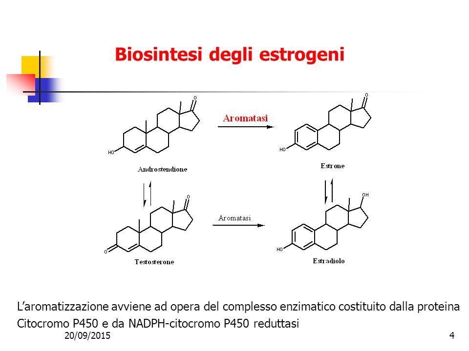 Biosintesi degli estrogeni