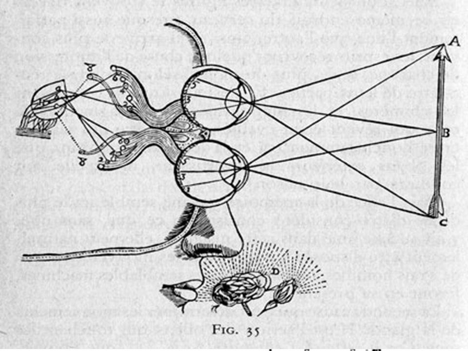 Perché il modello cognitivo cartesiano è oculo-visivo