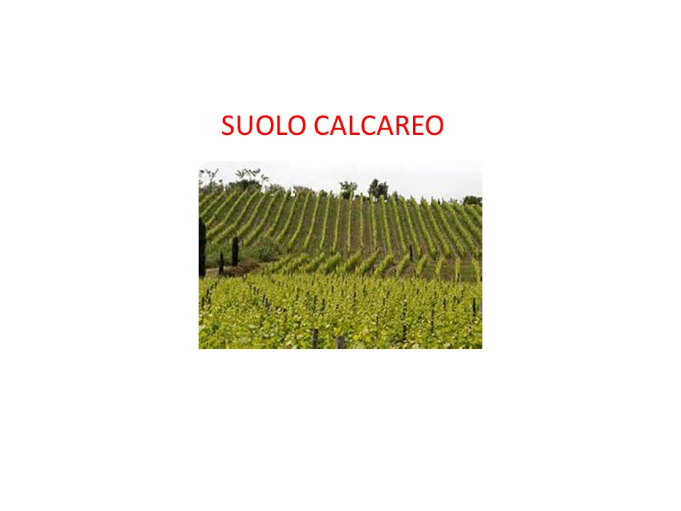 SUOLO CALCAREO