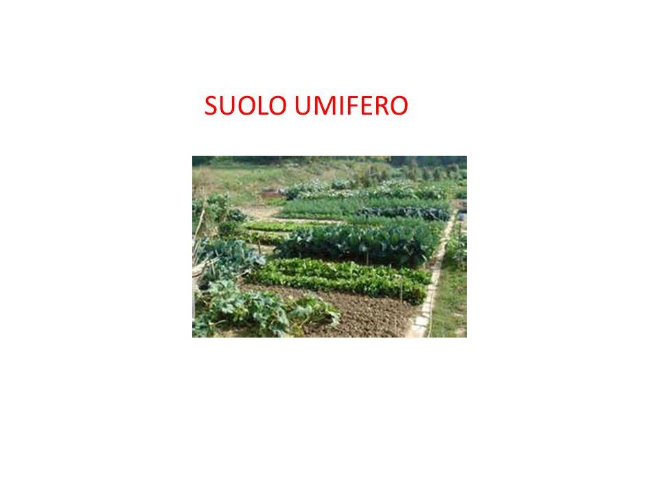 SUOLO UMIFERO