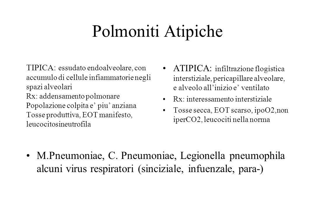 Micoplasma Solo il 3-10% dei soggetti infettati sviluppa polmonite