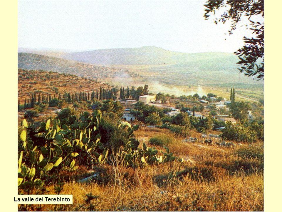 La valle del Terebinto