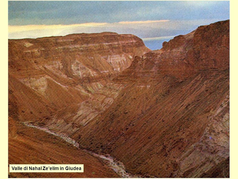 Valle di Nahal Ze'elim in Giudea