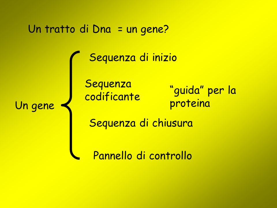 Un tratto di Dna = un gene