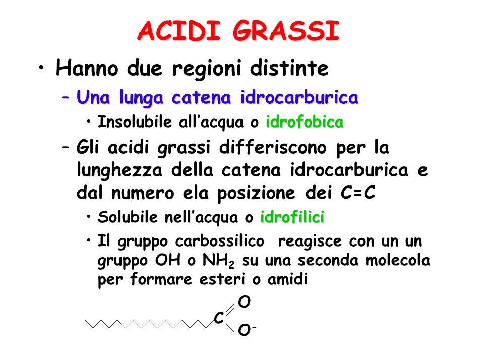 ACIDI GRASSI Hanno due regioni distinte Una lunga catena idrocarburica