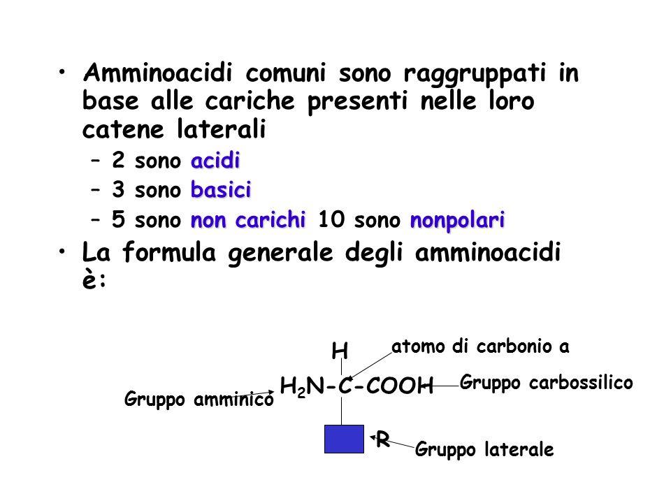 La formula generale degli amminoacidi è: