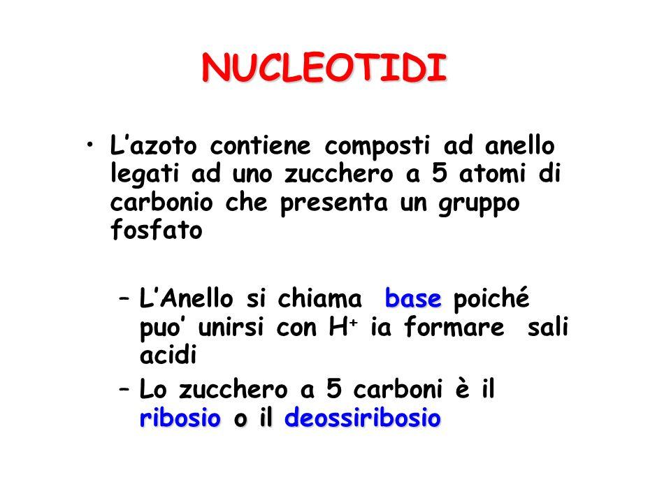 NUCLEOTIDI L'azoto contiene composti ad anello legati ad uno zucchero a 5 atomi di carbonio che presenta un gruppo fosfato.