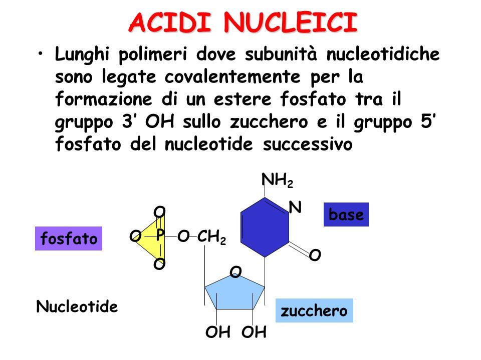 ACIDI NUCLEICI