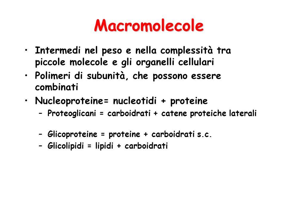 Macromolecole Intermedi nel peso e nella complessità tra piccole molecole e gli organelli cellulari.