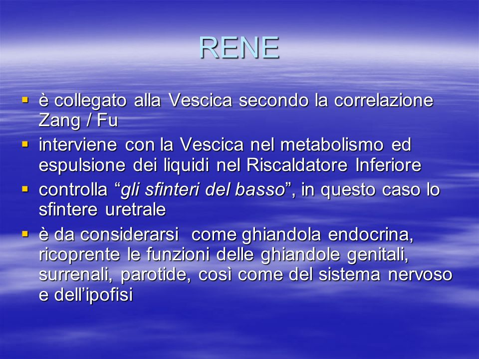 RENE è collegato alla Vescica secondo la correlazione Zang / Fu