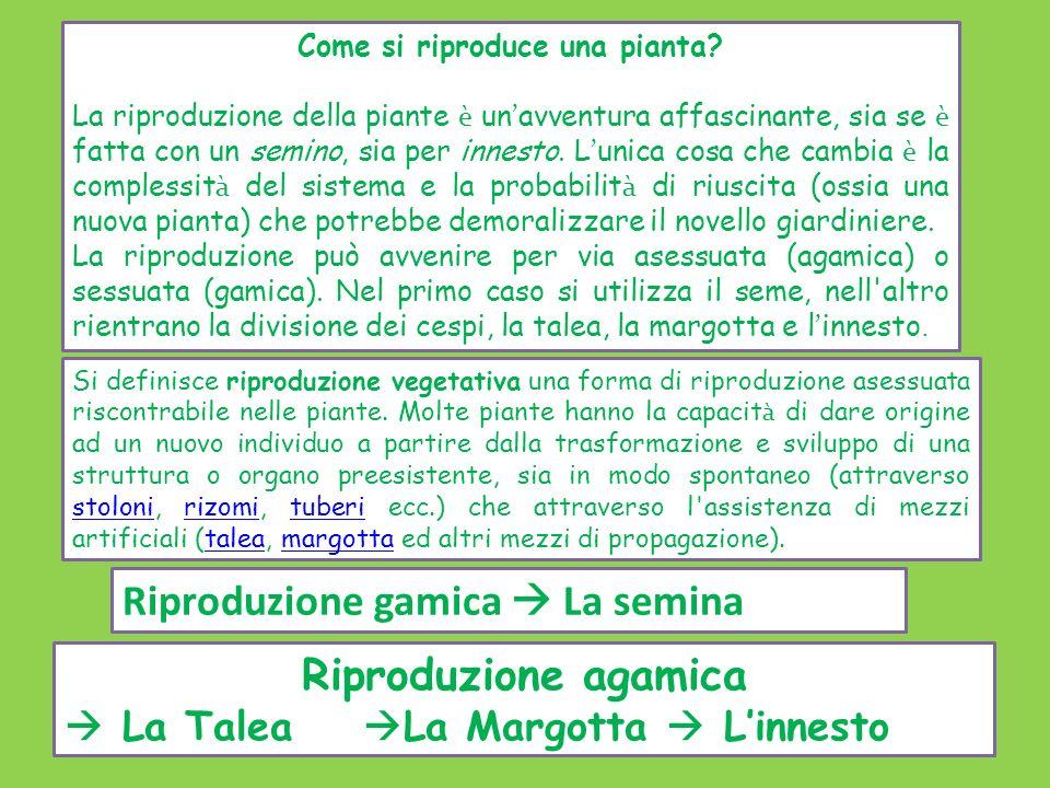 Come si riproduce una pianta