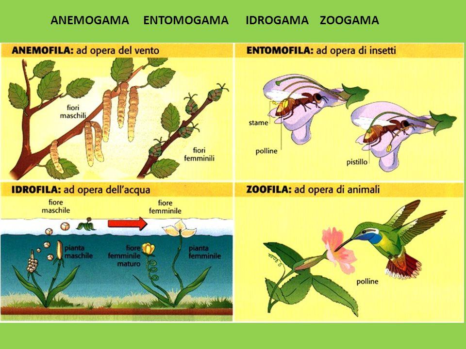 Anemogama entomogama idrogama zoogama