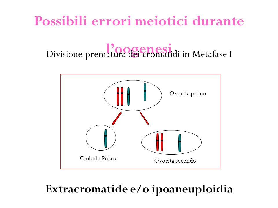Possibili errori meiotici durante l'oogenesi