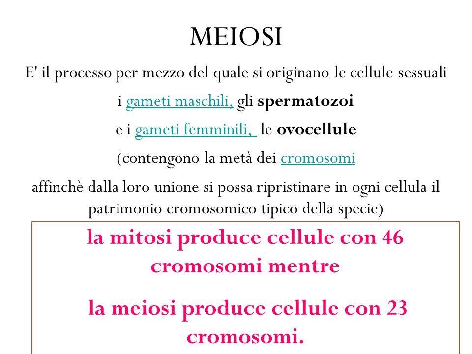 MEIOSI la mitosi produce cellule con 46 cromosomi mentre
