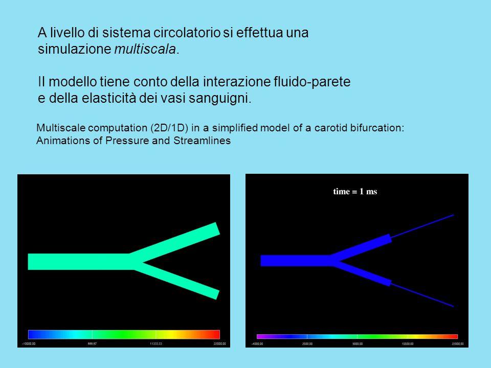 A livello di sistema circolatorio si effettua una simulazione multiscala.