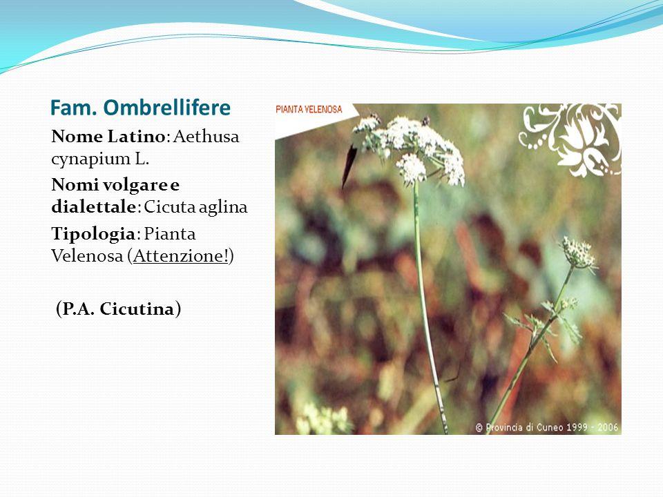 Fam. Ombrellifere Nome Latino: Aethusa cynapium L.