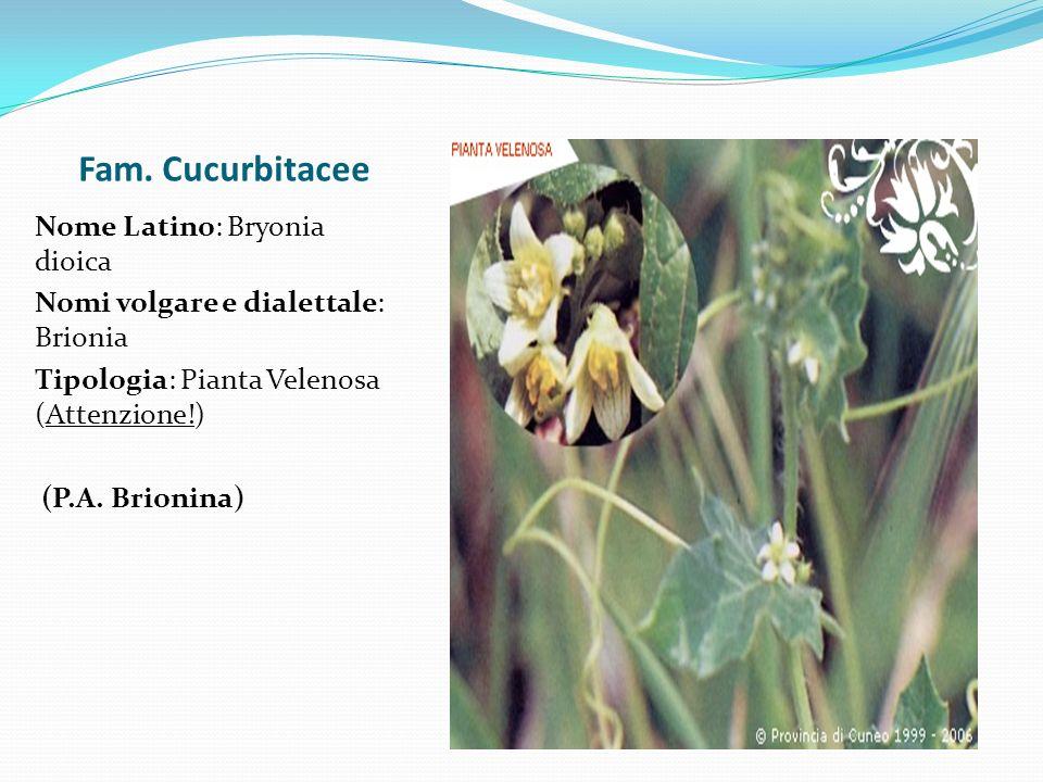 Fam. Cucurbitacee Nome Latino: Bryonia dioica