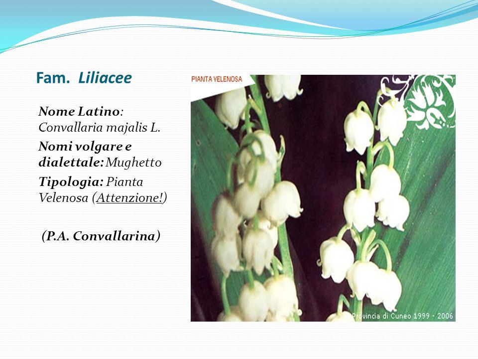 Fam. Liliacee Nome Latino: Convallaria majalis L.
