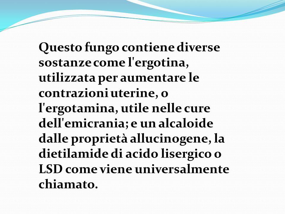 Questo fungo contiene diverse sostanze come l ergotina, utilizzata per aumentare le contrazioni uterine, o l ergotamina, utile nelle cure dell emicrania; e un alcaloide dalle proprietà allucinogene, la dietilamide di acido lisergico o LSD come viene universalmente chiamato.