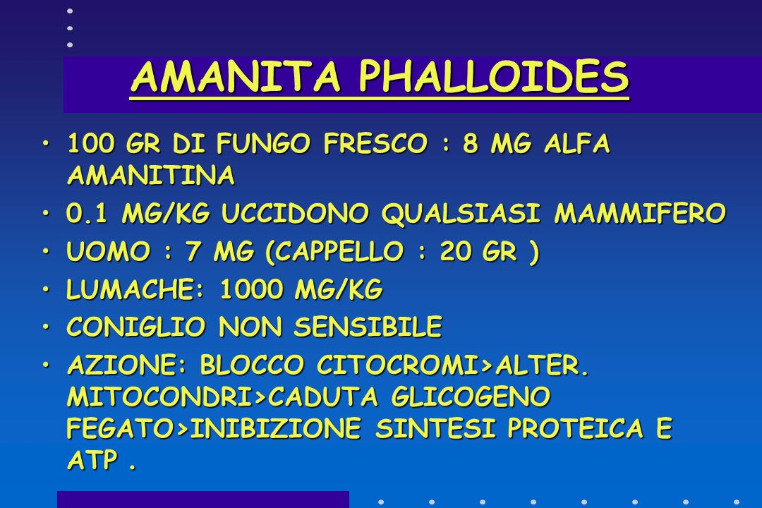 AMANITA PHALLOIDES 100 GR DI FUNGO FRESCO : 8 MG ALFA AMANITINA