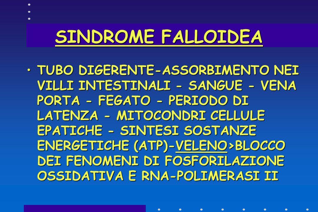 SINDROME FALLOIDEA