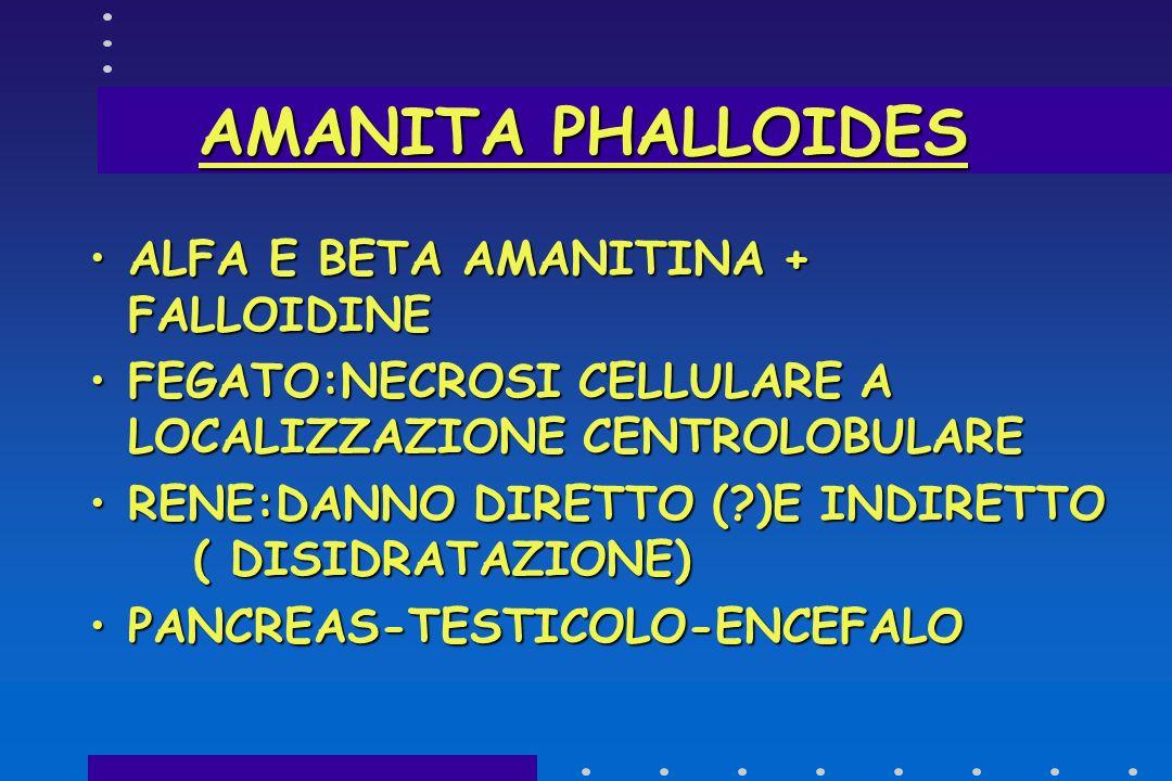AMANITA PHALLOIDES ALFA E BETA AMANITINA + FALLOIDINE