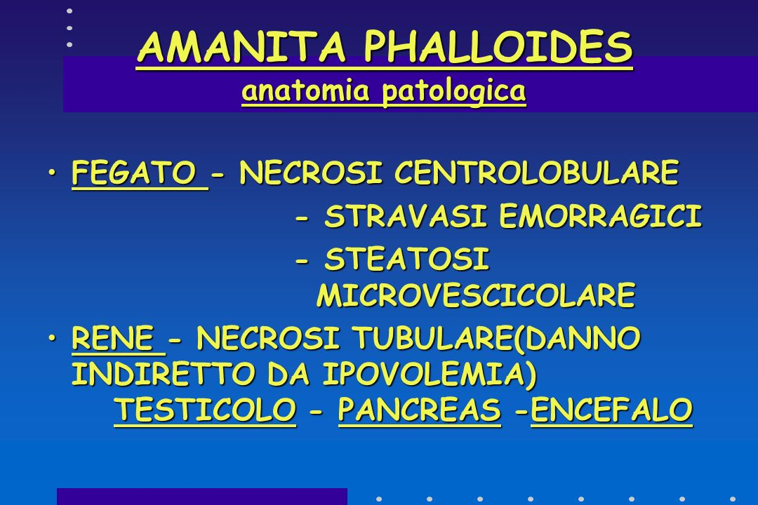AMANITA PHALLOIDES anatomia patologica