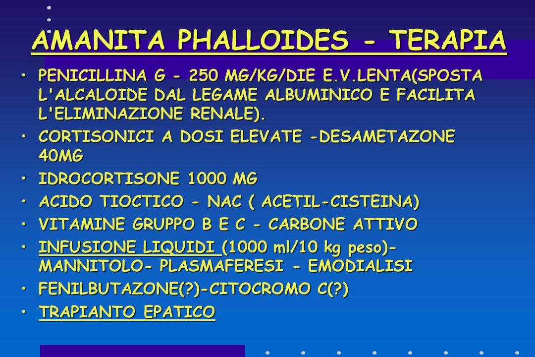 AMANITA PHALLOIDES - TERAPIA