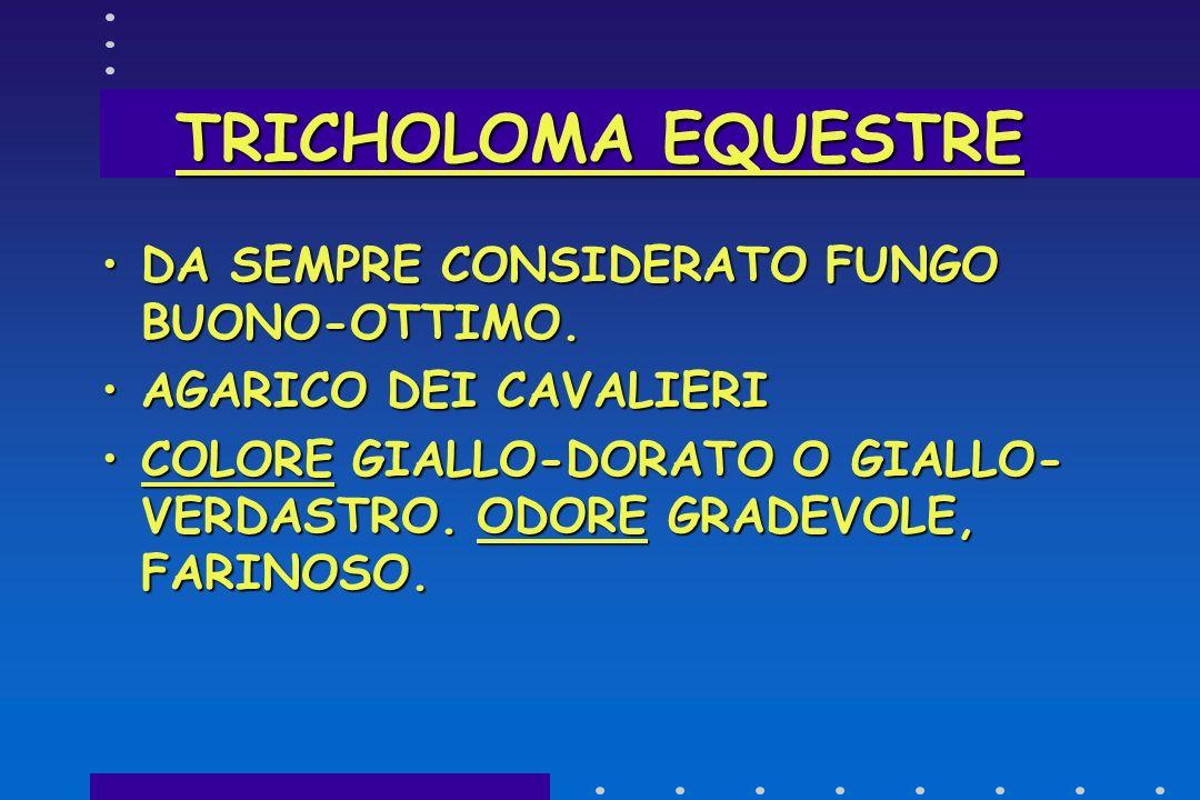 TRICHOLOMA EQUESTRE DA SEMPRE CONSIDERATO FUNGO BUONO-OTTIMO.