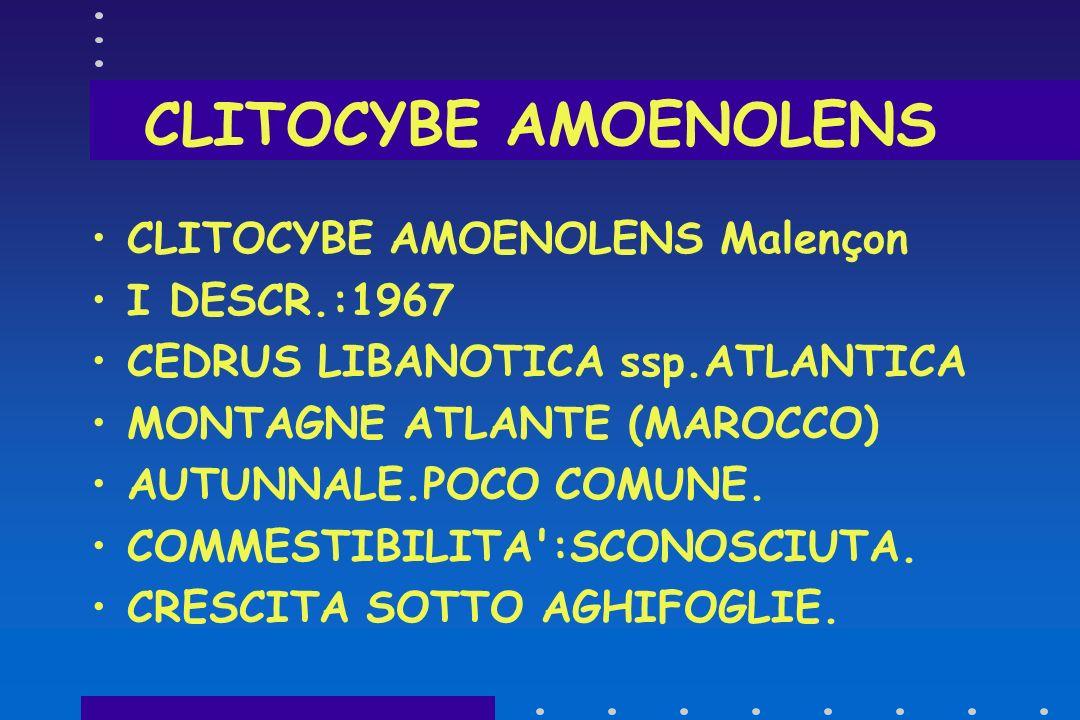 CLITOCYBE AMOENOLENS CLITOCYBE AMOENOLENS Malençon I DESCR.:1967